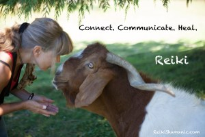 Reiki 1 Energy Healing For Animals And People