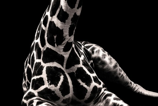 Giraffe Detail, ©2012 Jo Christian Oterhals on Flickr, permission by Creative Commons license