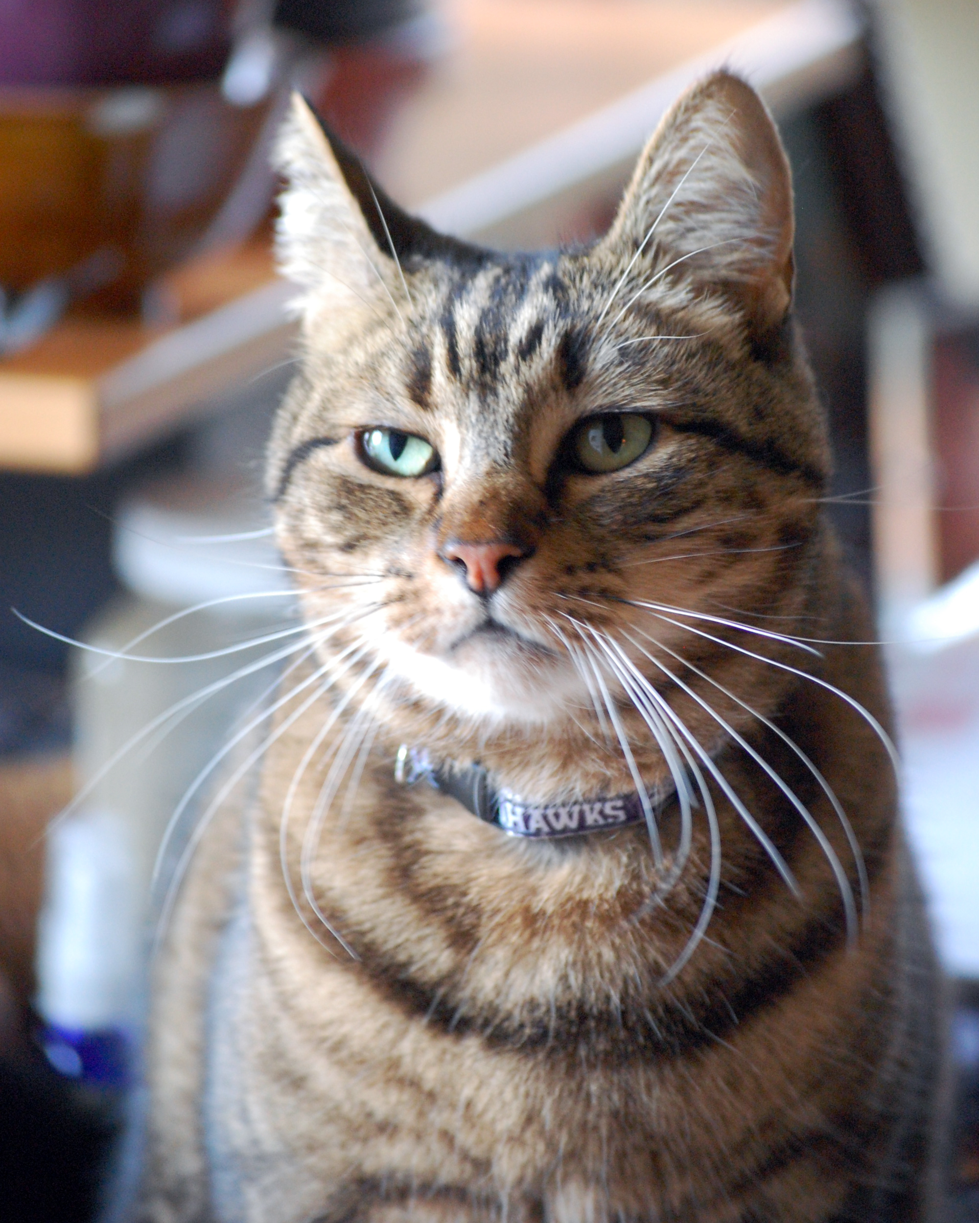 Shamanic Lessons, The Seahawks And 12th Cat