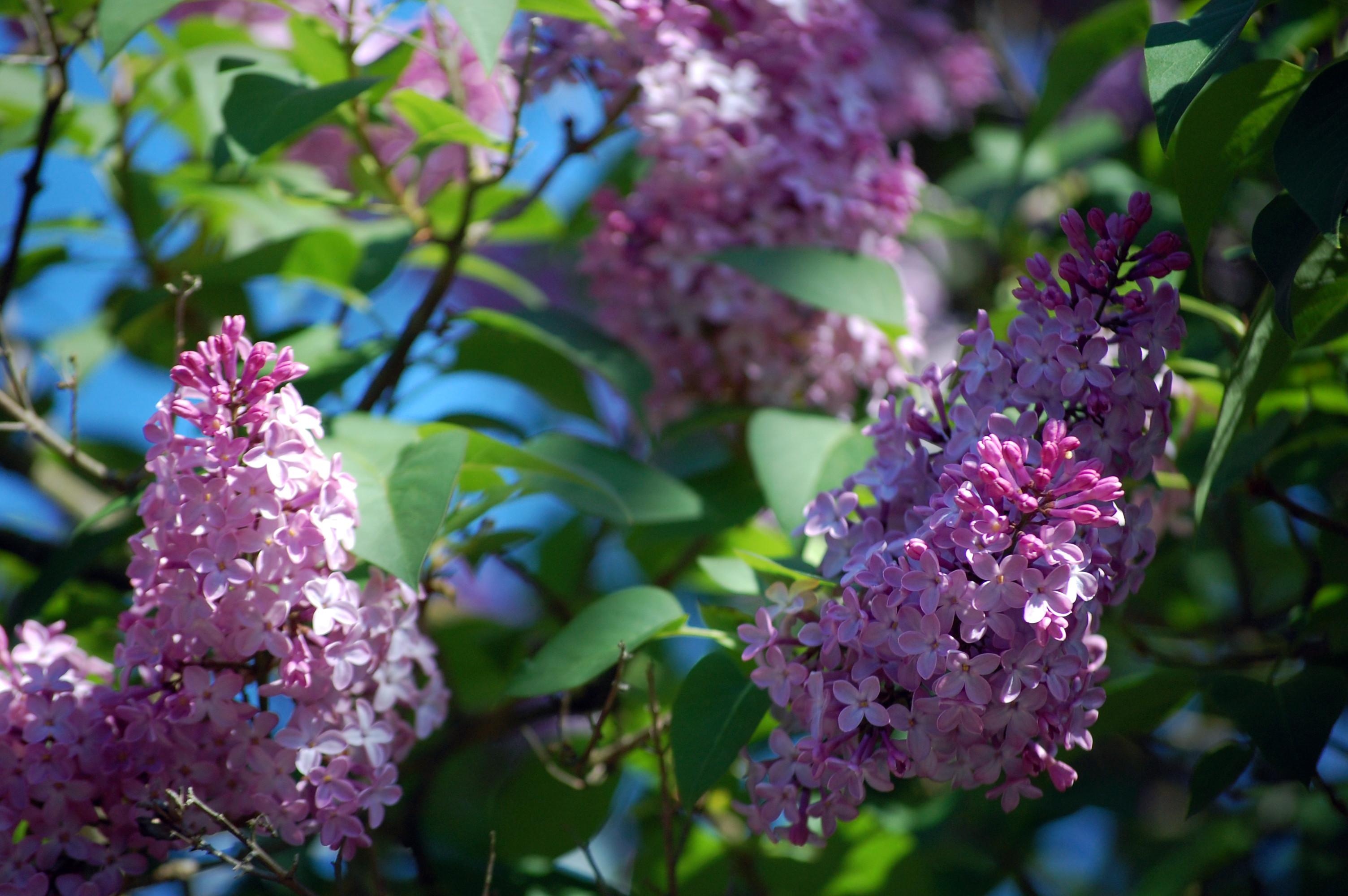 Growing A ReikiShamanic Garden