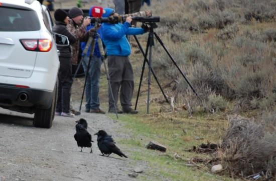 Ravens and Wolf Photographers, Rose De Dan www.ReikiShamanic.com