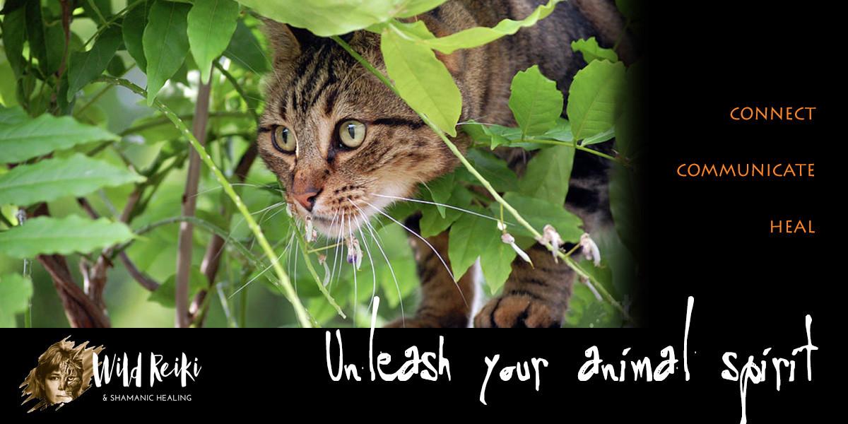 Animal Reiki shamanic classes, healing, animal communication
