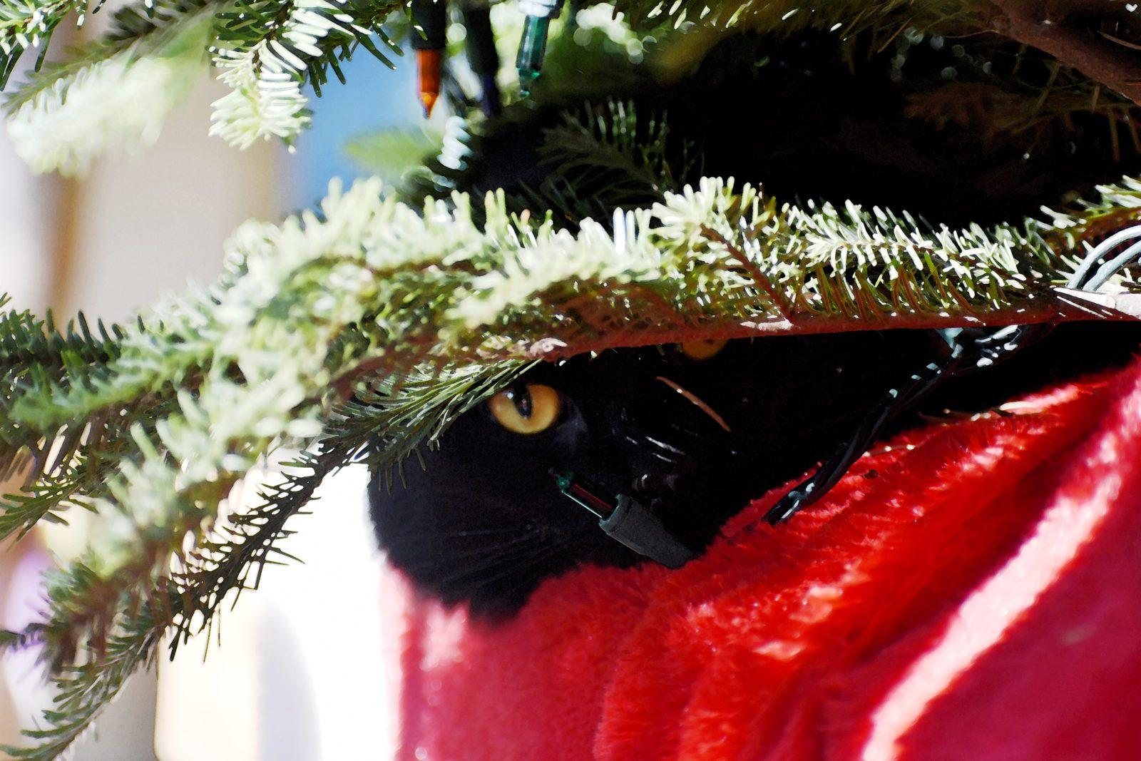 Cat Night Sky Versus The Christmas Tree