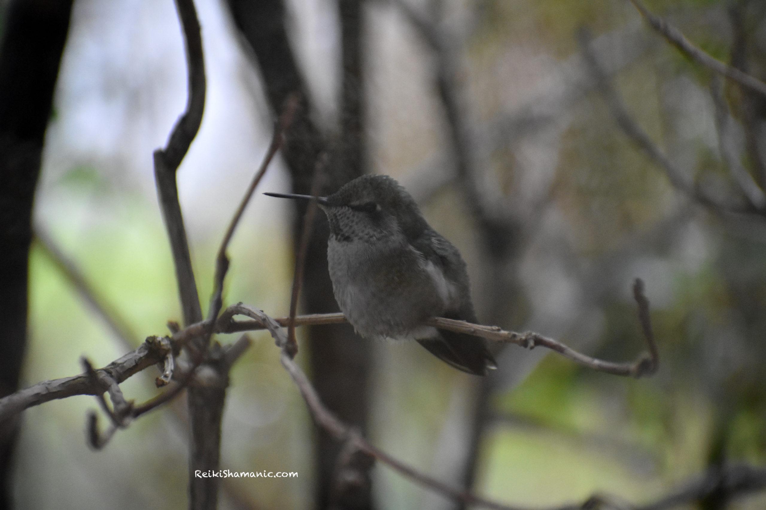 A Hummingbird Named Birch