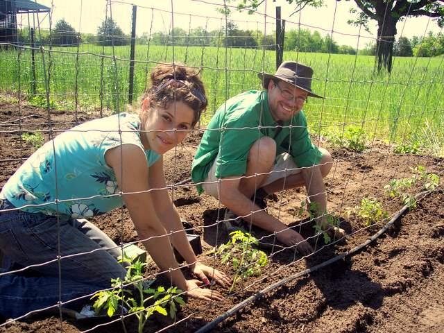 Volunteers Monica and Nick plant tomatoes