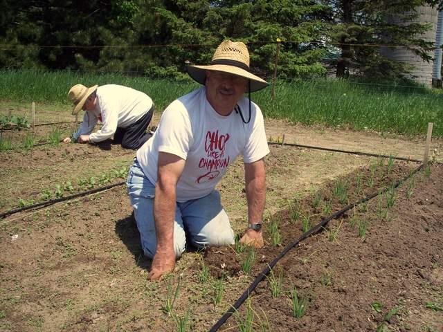 Darwin and Vangie weeding the onions