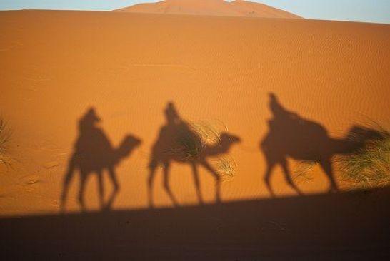 camels-897658__340