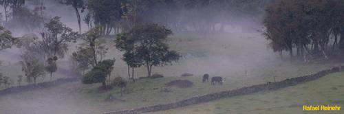 Neblina Verde II