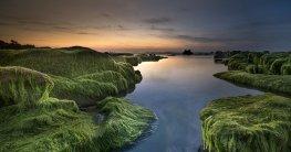 Teichfilter gegen Algen