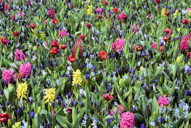 Keukenhof kleurrijk bloemententoonstelling