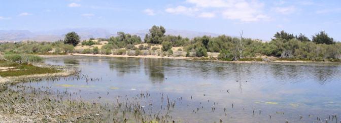Lagune El Charco Maspalomas vogelreservaat