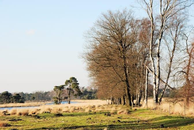 Strabrechtse Heide uitgestrekt heidelandschap