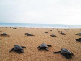 Turtle_001