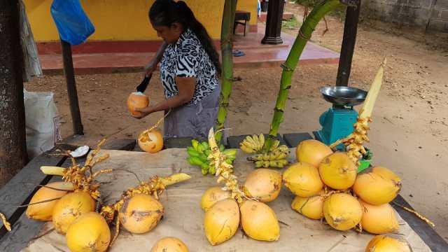 Kokosnuss-Stand
