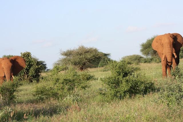 Reisebericht Kenya