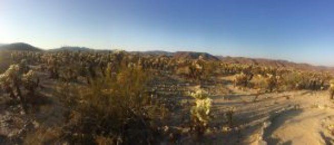 Joshua Tree Cactus garden