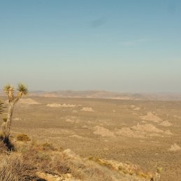 Landschaft Joshua Tree