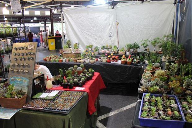 Australische Flora (Blumen und so)