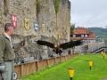 Burg Guttenberg mit der Deutschen Greifenwarte - Flug