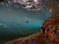 Zoo Wuppertal - Unterwassertunnel in der Pinguinanlage
