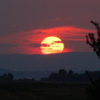 Sonnenuntergang Nationalpark Neusiedler See