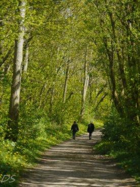 Waldpromenade auf Poel