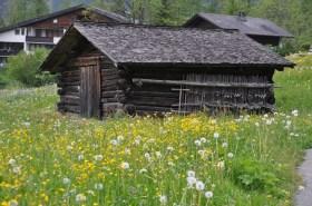 Blumenwiese vor einer Hütte auf dem Weg zum Lärchenhof.