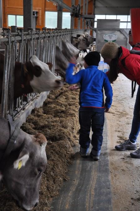 Kühe Bauernhof Brand Tiererlebnispfad