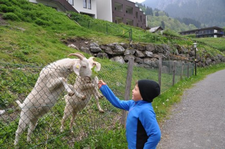 Ziegen füttern und