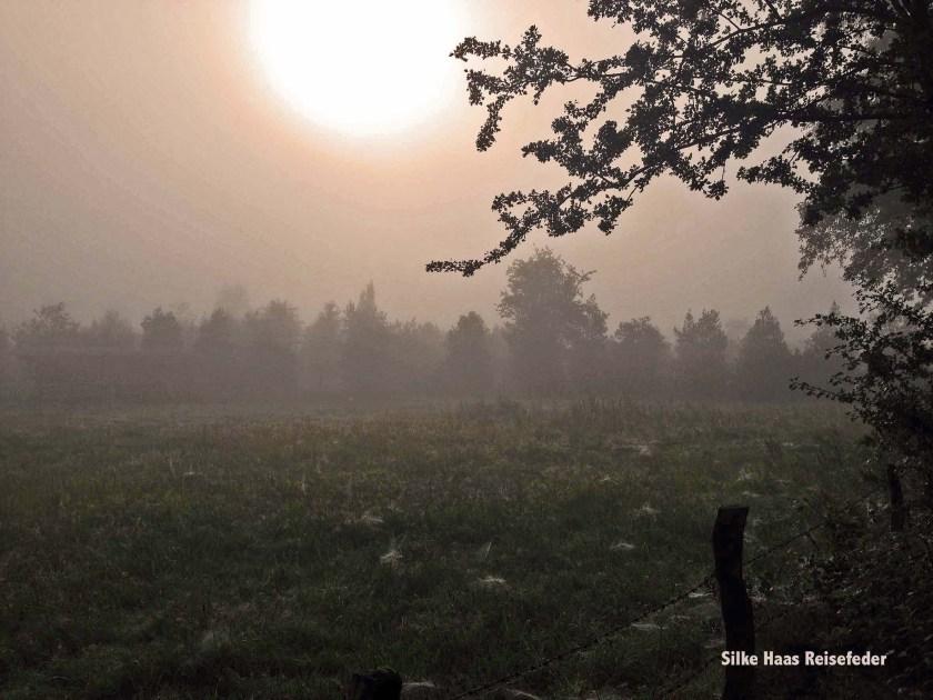 Milchig geht die Sonne über Nebelschwaden auf