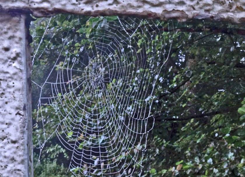 Spinnwebe an einem Geländer