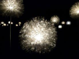 Leuchtende Pusteblumen im Magdalenengarten