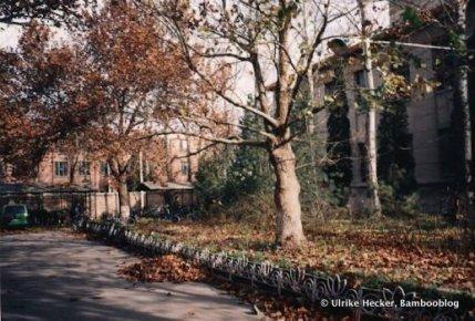 BLI Herbst
