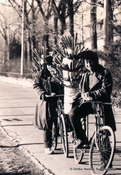Winterspezialität: Tang Hulu, kandierte Weissdornfrüchte oder Äpfelchen auf einem Bambusspieß - eine besondere Winterspezialität in Nordchina.