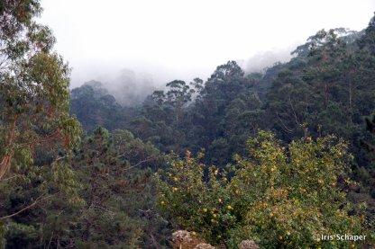 Wolkenbank senkt sich auf den Wald, Madeira