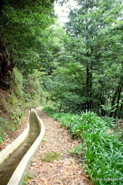 Madeira: Wanderweg neben Levada