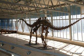 Dinosaurierspuren Halle Dinopark Münchehagen