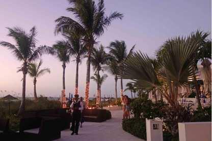 Und die Palmen!