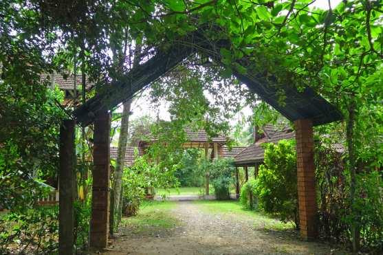 Grüne Auffahrt vom Basis Village Resort