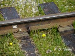 Eisenbahnschiene mit Löwenzahnblüten