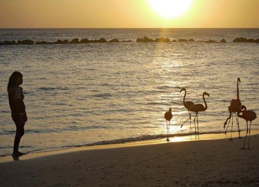 Aruba-ABC-Inseln-ABC-A-28-FlamingoInsel_1k4