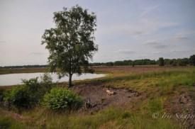 Uferbereich des Baggersees an der A31