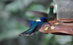 Kolibri2