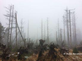 Harz im Nebel