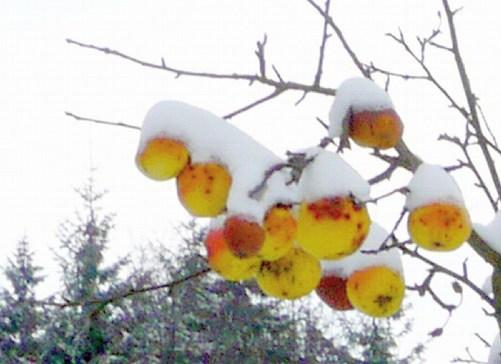 ...mit Schneehaube :)