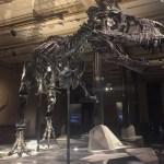 "Museum für Naturkunde in Berlin: ""Lauter tote Tiere"""