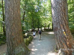 Wandern im schattigen Park zwischen alten Bäumen