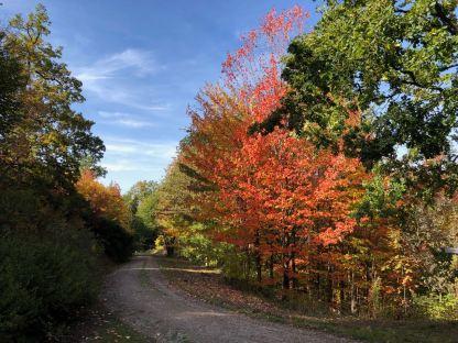 Herbst im Weltwald