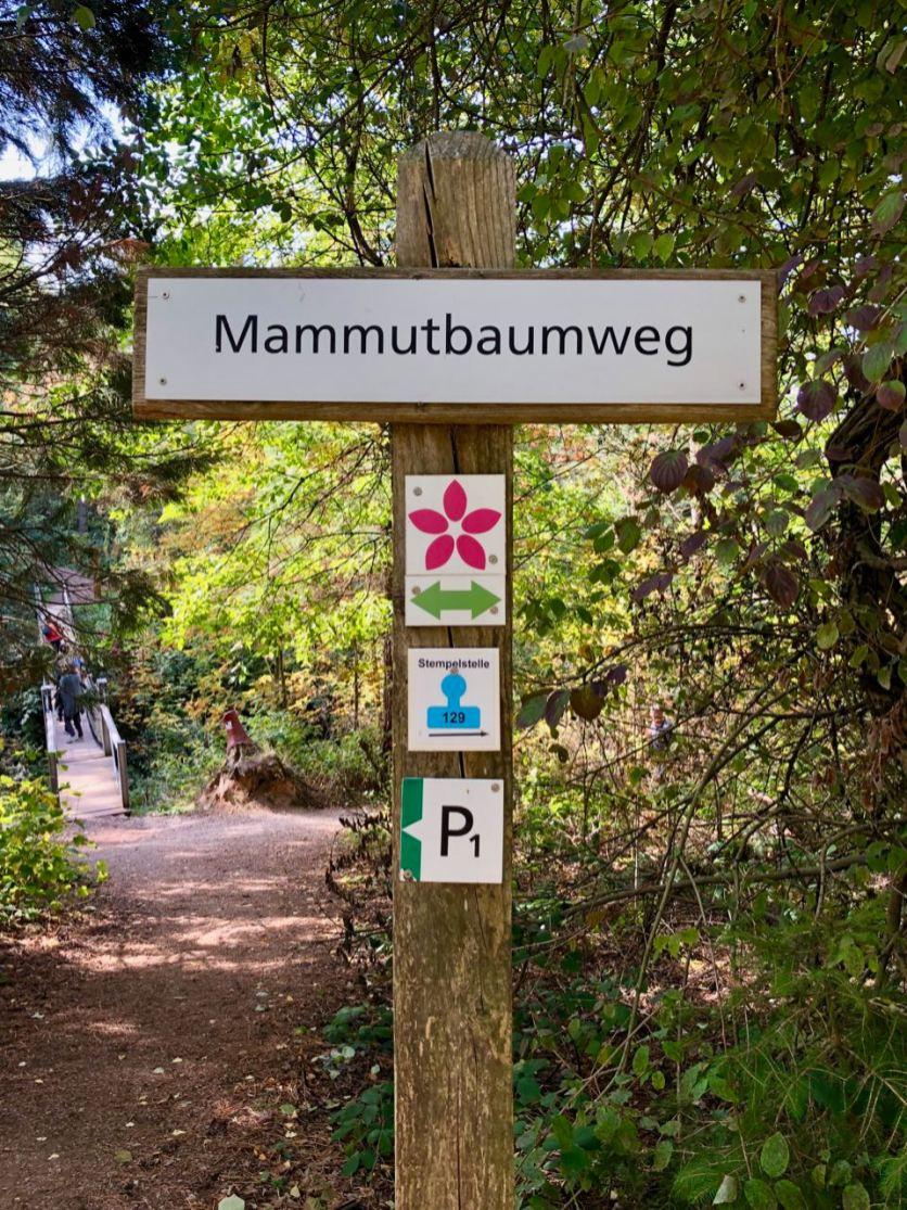 Schild Mammutbaumweg