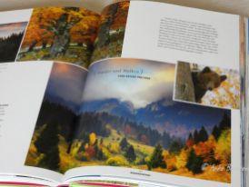 Reisefeder Benstem Bücher Waldwunder3